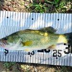 【バス釣を攻略】釣れない理由と釣るために必要なスキルを徹底解説